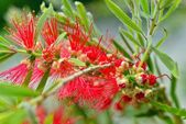 Red exotic flower in the garden — Stock Photo