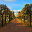 Stock Photo: The alley with benches in Catherine park in Pushkin, Russia