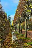 El callejón con bancos en el parque de catalina en pushkin, rusia — Foto de Stock