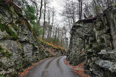 Road in the forest near Hohenschwangau castle in Germany — Stock Photo