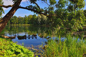 Summer Landscape with lake in Gatchina garden, — Stock Photo
