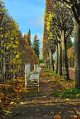 The alley with benches in Catherine park in Pushkin, Russia — Stock Photo