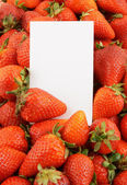 Fresh strawberries with blank white card — Stockfoto