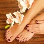 Постер, плакат: Female feet at spa salon on pedicure procedure