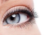 Güzellik kadın gözü ile curl uzun yanlış eyelashes — Stok fotoğraf