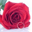 Rose and the Ring — Stock Photo #11418146