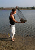 Fishers hands lift a net with fish — Stock Photo