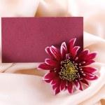 Chrysanthemum form on silk — Stock Photo