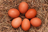 Eggs in nest — Stock Photo