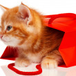 Red kitten — Photo