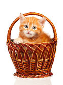 Red kitten — Stock Photo