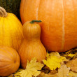 Ripe pumpkins — Stock Photo #13484795