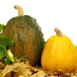 Ripe pumpkins — Stock Photo #13605922