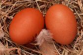 Eggs in nest — Stock Photo