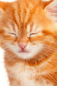 Red kitten — Stock Photo