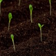 Green seedling — Stock Photo