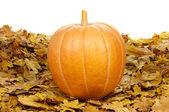 Ripe pumpkins — Stock Photo