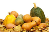 Ripe pumpkins — Stock Photo