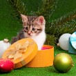Cute kitten - Stockfoto