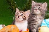 Söta kattungar — Stockfoto