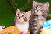 Gatinhos fofos — Foto Stock