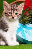 Söt kattunge — Stockfoto