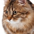 Portrait of cat — Stockfoto