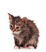 Wet kitten — Stockfoto
