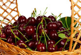 Sweet cherries — Stock fotografie