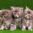 Cute gray kittens — Stock Photo