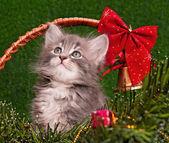 Cute gray kitten — Stock Photo
