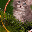 Cute gray kitten — Stock Photo