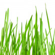 Wheat grass — Stock Photo #39762101