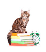 Kitten with books — Stockfoto
