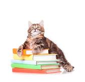Kitten with books — ストック写真