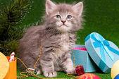 Roztomilý kotě — Stock fotografie