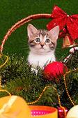 Piękny kociak — Zdjęcie stockowe