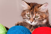 Kitten with clews of thread — Stock Photo