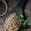 Stock Photo: Coriander Seed