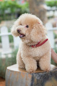 Dog Resting on the bench — Stock Photo