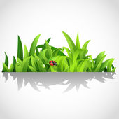 Green lush grass with dew and ladybird — Stock Vector
