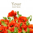 Beautiful banner with red poppies for your message - 图库矢量图片