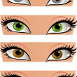 Female color eyes look in the face — Stock Vector