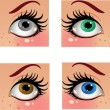 Beautiful female color eyes look in the face — Stock Vector