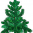 Stock vektor: Green fir-tree