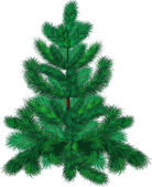 Green fir-tree — Vettoriale Stock