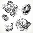 Set of sketches different shapes shell 1 — Stock Vector