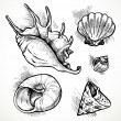 Set of sketches different shapes shell — Stock Vector