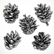 Stock Vector: Sketch drawing pine cones on white background