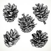 Sketch drawing pine cones on white background — Stock Vector